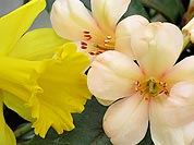 Daffodil and Friends (7139 bytes)