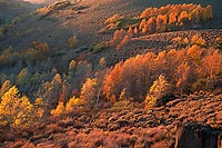 Fall Aspens - Steens Mountain, Southeast Oregon (12562 bytes) www.jeffkrewson.com