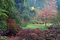 Tree In Clearing, Washington Park Arboretum - Seattle, Washington (13015 bytes) www.jeffkrewson.com